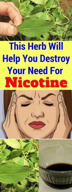 This Herb Will Help You Destroy Your Need For Nicotine – Today Health People