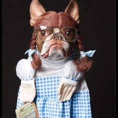 Funniest Boston Terrier on a costume. Funny Dogs, Cute Dogs, Funny Animals, Cute Animals, Love My Dog, Dog Halloween Costumes, Pet Costumes, Pet Shop, Pugs