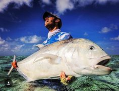 Check out this monster GT from @christiaanpretorius What a savage fish!  #gianttrevally #flyfishing #fishing - Book your next fishing trip on Amberjack.com today.