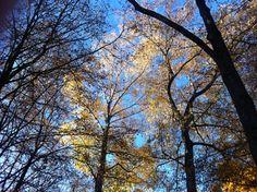 Blauer Himmel, leichtes Gemüt. Morgenmomente im November - Waldhotel Stuttgart.