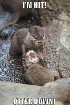 Funny pictures about Otter down. Oh, and cool pics about Otter down. Also, Otter down. Animal Captions, Funny Animal Memes, Funny Animal Pictures, Cute Funny Animals, Funny Cute, Funny Memes, Funny Ads, Otters Funny, Animal Humor
