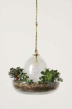 Anthropologie - Terrarium Pendant Lamp