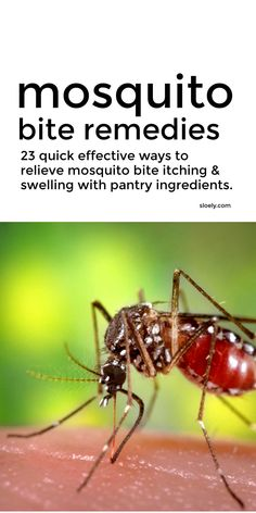 These mosquito bite remedies provide quick effective relief for mosquito bite itching and swelling with simple pantry ingredients you already have in your home rather than fancy essential oils. #mosquitobite #mosquitobiteremedy #mosquitobiterelief #naturalremedies #homeremedies