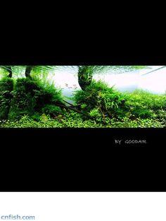 造景之路:水草造景(120CM)-72 - 田园漫步 - walkingfarm-田园漫步