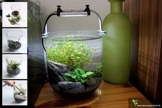 Mini-Aquarium 4 Liter nach 4 Wochen. Die Pflanzen habe ich heute etwas zurückgeschnitten. Als Dünger gebe ich ab und zu ein Tropfen EasyCarbo und etwas Eisenvolldünger. Beleuchtet wird mit einer Daytime eco nano 10.