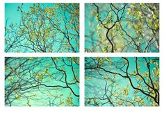 Four Sky Landscape Photographs Nature Photography  by JudyStalus