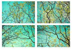 Four Sky Landscape Photographs Nature Photography  by JudyStalus