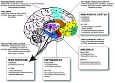 Image result for cortex prefrontal