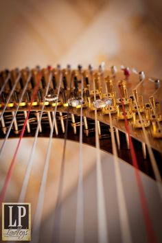 My harp at the Historic Hay House with the wedding bands on my discs. Wedding Fun, Wedding Bands, Weddings, Music, Photography, Style, Harp, Hay, Musica