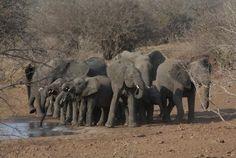 Kruger National Park Mauritius, Kruger National Park, National Parks, Four Legged, South Africa, Elephant, Holidays, Friends, Travel