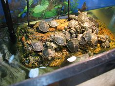 Turtles As Pets Cool Exotic Pets ? Blog Archive Equipment Needed To ...