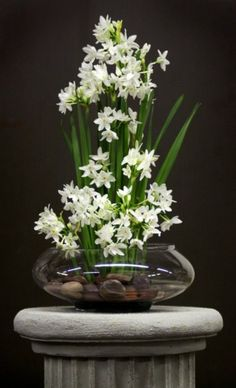 narcissus - love them! Reminds me of the house I grew up in