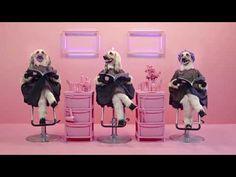 One Balloon Monkey - Balloon Animal Lessons #8 ( globoflexia ) - YouTube