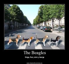 The Beagles crossing the Abbey Road in London