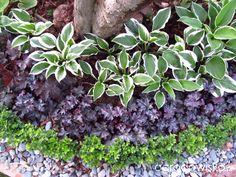 Ogród KasiWB - część II - strona 7 - Forum ogrodnicze - Ogrodowisko