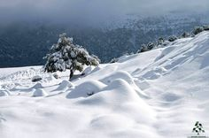 A beautiful view of the snow in Kobayyat - By Rodrigue Zahr
