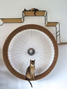 If you have an indoor-only cat, an exercise wheel might provide a good way for them to keep moving, even though it may look a little funny. Check out these six videos of cats getting in shape for the New Year with a little help from their exercise wheels. Different Types Of Cats, Kinds Of Cats, Kittens Cutest, Cats And Kittens, Cat Exercise Wheel, Cat Playground, Hamster, Pet Furniture, Cheap Furniture