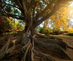Tree of photographers by Luis Valadares #xemtvhay