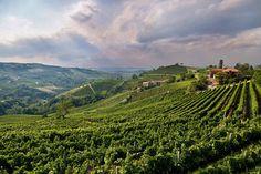Oltrepò Pavese vineyards