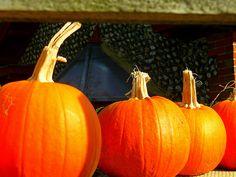 Slindon Pumpkin Festival (West Sussex), October 2010