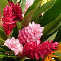 Types of Exotic Flowers | ... ,gingers,tropical mix,tropical mix boxes,perla farms tropical flowers