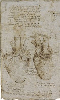 The heart and coronary vessels, 1511-13 (image from Leonardo da Vinci, Anatomist)