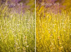 Demystifying white balance