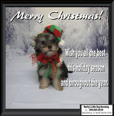 🤶 Merry Christmas from our family to yours & All The Best In Small Breed, Little Dogs, Dog Grooming, Merry Christmas, Animals, Little Puppies, Merry Little Christmas, Animales, Animaux