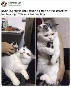 Cute Animal Memes, Animal Jokes, Funny Animal Pictures, Cute Funny Animals, Meme Pictures, Funny Cute Cats, Funny Kittens, Funny Cats And Dogs, Funny Cat Memes