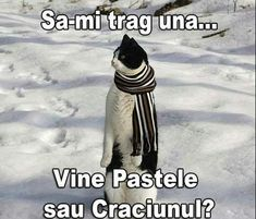 Animals And Pets, Funny Cats, Comedy, Memes, Watch, Makeup, Funny, Pets, Make Up