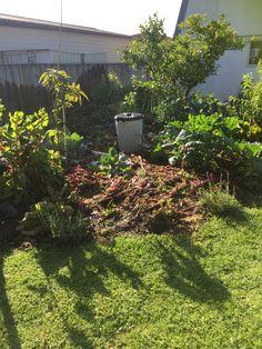 Moving the fertiliser into the garden.