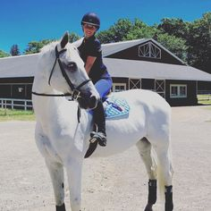 I also started my Holsteiner gelding on Equine Mega Gain and in just… – Art Of Equitation Cute Horses, Pretty Horses, Horse Love, Horse Girl, Beautiful Horses, Aqha Western Pleasure, Horse Pictures, Horse Photography, Horseback Riding