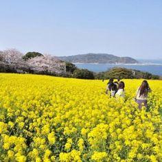 Nokonoshima and Shikanoshima Island Park