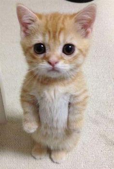 10+ очаровательных котов, которые уверены, что они должны быть двуногими