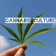 hope 2019 is the best Weed Pictures, Weed Strains, Happy New Year, Cannabis, Plant Leaves, Plants, Image, Ganja, Plant