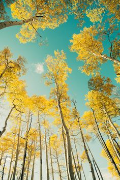 Photograph Puffy Little Cloud In The Autumn Sky by Cinematic Photography on Cinematic Photography, Nature Photography, Yellow Aesthetic Pastel, Gras, Mellow Yellow, Amazing Nature, Belle Photo, Beautiful World, Aesthetic Wallpapers