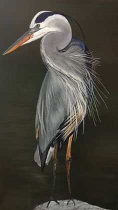 Acrylic painting on stretched canvas Bird Drawings, Cool Art Drawings, Wildlife Paintings, Animal Paintings, Pretty Birds, Beautiful Birds, Art Scratchboard, Bird Artwork, Abstract Animals