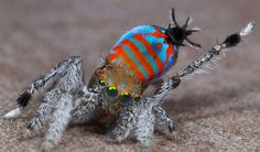 8 Wild Creatures We Never Knew Existed — Before This Year