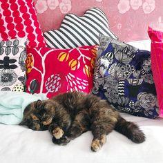 Happy Caturday! ♥️ #siiritheexotic #kissa #cat #neko #katt #ねこ #ネコ #猫 #instacat #catsofinstagram #catsgram #eksoottinenlyhytkarva #exoticshorthair #exoticsofinstagram #crazycatlady #ilovecat #pawsome #cosycathome #caturday #marimekko #oravankesäpesä @oravankesapesa Exotic Shorthair, Marimekko, Backrest Pillow, Crazy Cat Lady, I Love Cats, Neko, Cats Of Instagram, Cosy, Throw Pillows