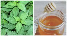 Plant Leaves, Herbs, Nature, Plants, Beauty, Naturaleza, Herb, Plant, Nature Illustration