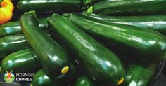 ~ How to Freeze Zucchini This Summer and Keep Them Fresh in 5 Easy Steps + recipes to use them with! Homemade Protein Shakes, Protein Shake Recipes, Growing Zucchini, Freeze Zucchini, Zuchinni Recipes, Hydrating Foods, Freezing Vegetables, Root Vegetables, Corn Relish