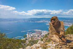Discover the fascinating history of the British settlement of Gibraltar on a full-day tour from the Algarve. Explore its prehistoric findings, Ice Age caves, Muslim legacy and more. Spain And Portugal, Portugal Travel, Faro Portugal, Portugal Trip, Rock Of Gibraltar, British Overseas Territories, Holiday Places, Algarve, Day Tours