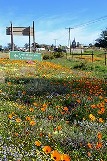 Kamieskroon is a one-horse town that blazes with colour when Namaqualand bursts into bloom. And it's the site of one of the strangest stories this side of the Northern Cape...
