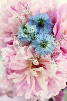 So lovely. . .from the blog paysdemerveille BROC rose000