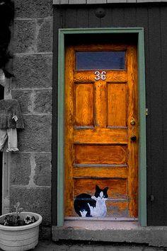 Door - Painted cat door.