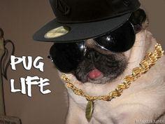 Pug life... Hahahaha!
