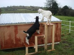 Google Image Result for http://www.carocu.com/wp-content/uploads/2011/12/Goat-House-Making-Party-Today.jpg