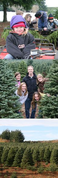 Tucker Christmas Tree Farm