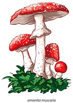 "Photo from album ""Грибы"" on Yandex. Mushroom Paint, Mushroom Crafts, Mushroom Drawing, Mushroom House, Decoupage, Mushroom Tattoos, Whatsapp Wallpaper, Botanical Illustration, Clipart"