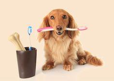 Pielęgnacja zębów u psa:  http://www.kakadu.pl/Zdrowie-psow/pielgnacja-zbow-u-psa.html